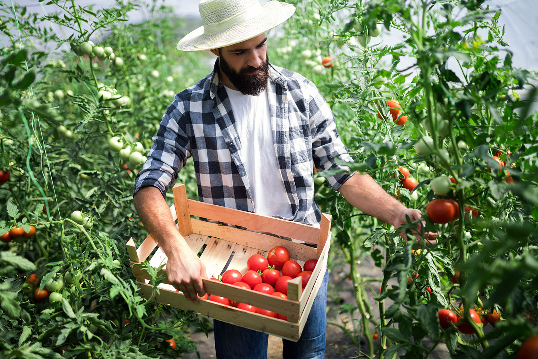 exploitant agricole tomate mutuelle generale d'avignon
