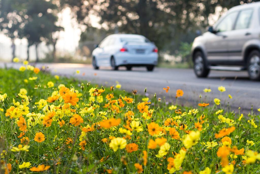 route tranquille voiture sur route avec petites fleurs en premier plan Mutelle Générale Avignon